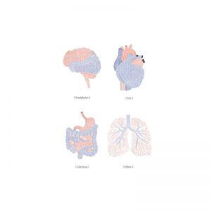Foto tapetai Organs - Anatomy of the soul, P132601-W