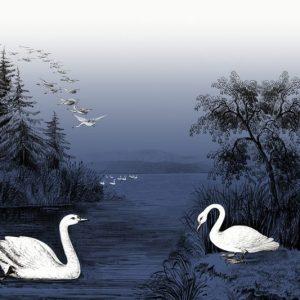 tapetai rebelwalls, deco, Swan Lake, Nightfall R16222