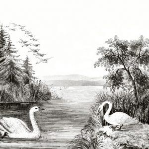 tapetai rebelwalls, deco, Swan Lake R16221